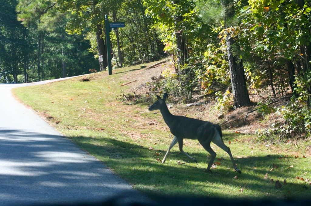 Deer In Stillwaters Lake Martin