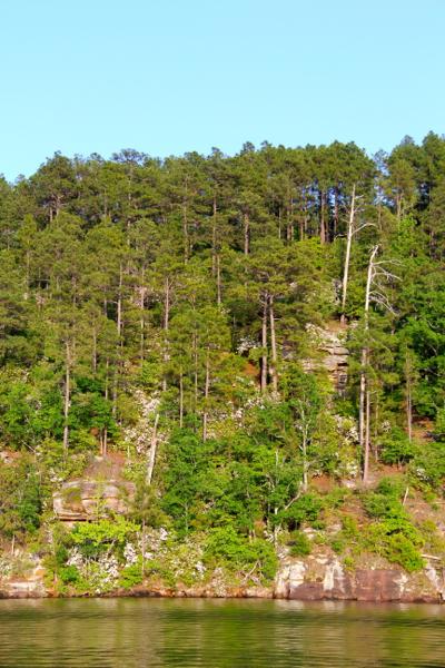 Chimney Rock blooms