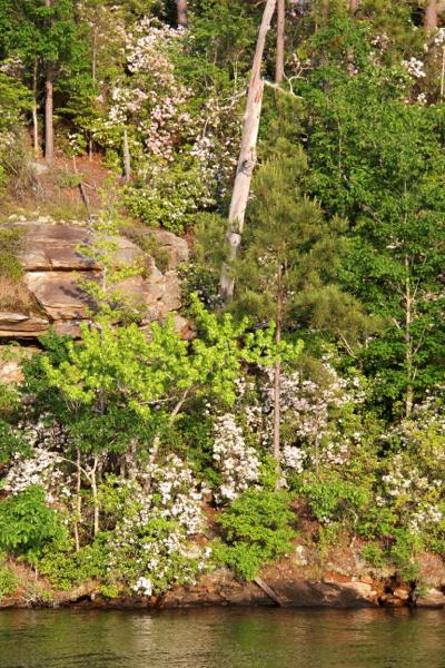 Lake Martin Blooms Chimney Rock