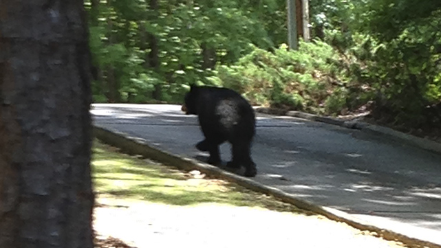 lake martin alabama BEARS