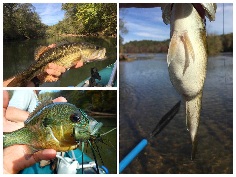 fish-collage